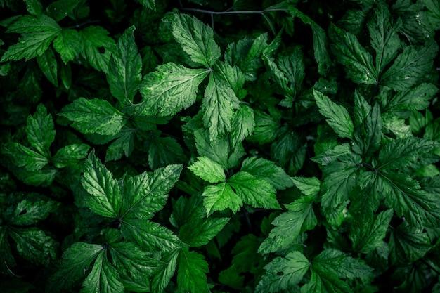ビンテージフィルターと緑の葉の自然な緑の背景