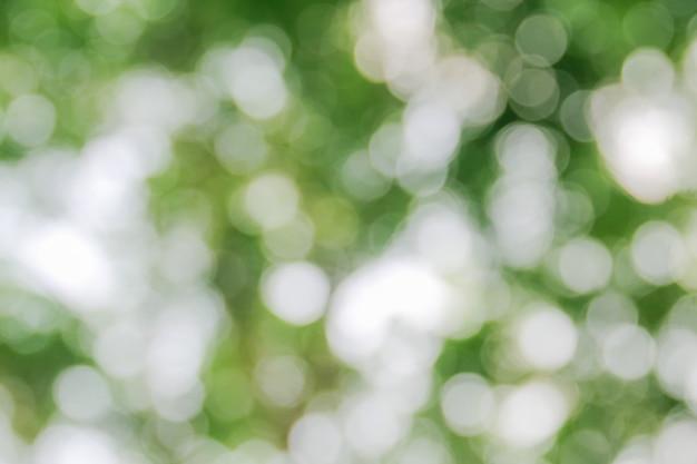 ツリーの抽象的な背景から自然な緑ボケ