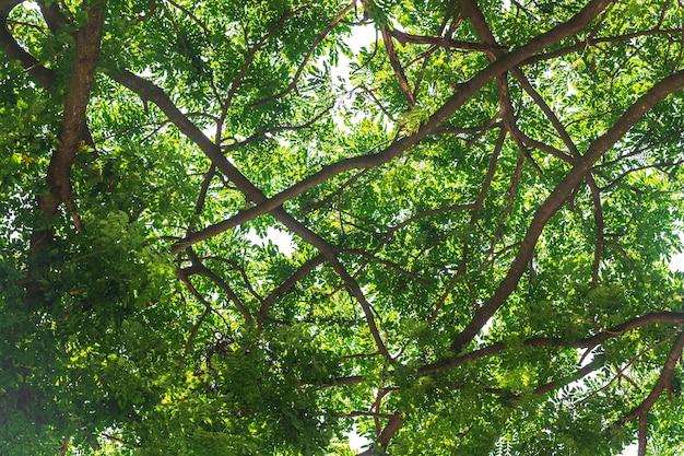 緑色の葉は、白い背景に
