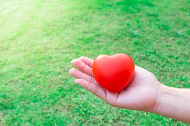 Красное сердце на ладони, ярко-зеленая трава в саду