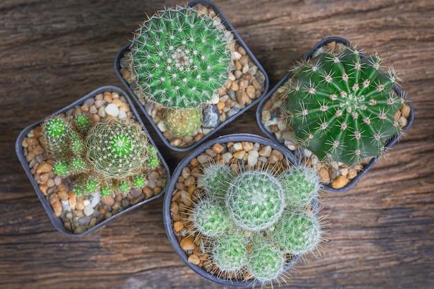 Высокий угол обзора многие виды кактусов лежали на старом деревянном столе