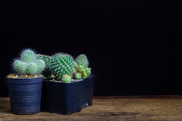 Многие виды кактусов лежат на старом деревянном фоне