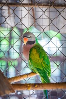 Крупный план зеленых попугаев в клетке