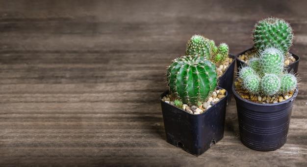 Многие виды кактусов лежат на старом деревянном столе