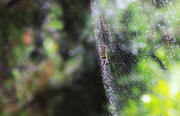 ウェブ上のクモ。