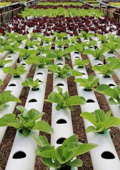 Гидропонная овощная ферма.