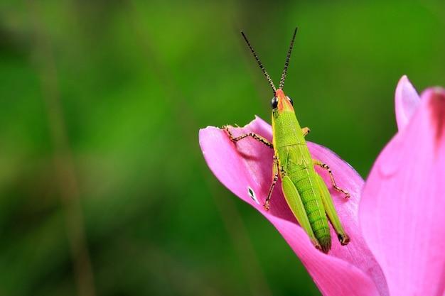 花に緑のバッタ