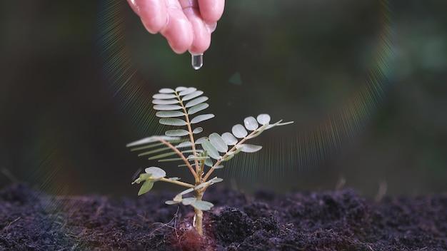 小さな植物に水をまく女性の手
