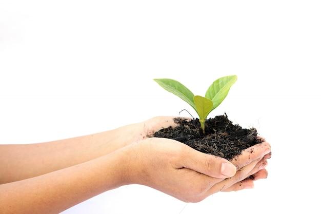 Рука женщины держа маленькое зеленое дерево