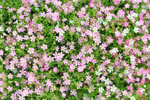 花の背景のクローズアップ
