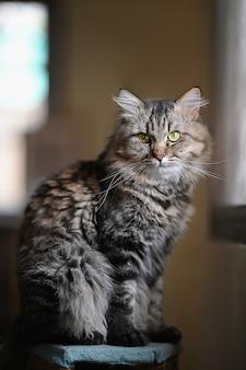 Фото очаровательны главного кота енота, сидя на столе над упорядоченной гостиной. домашнее животное в домашней концепции.