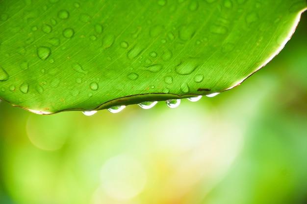 Вода падает на банановые листья