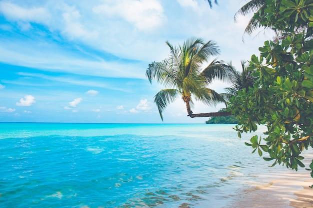 Кокосовые пальмы торчат на море в день ясного неба, ко куд, таиланд