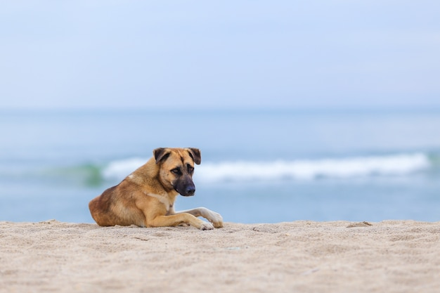 朝の浜辺の犬。ソフトフォーカス