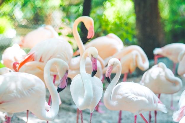 フラミンゴの群れ、自然の背景