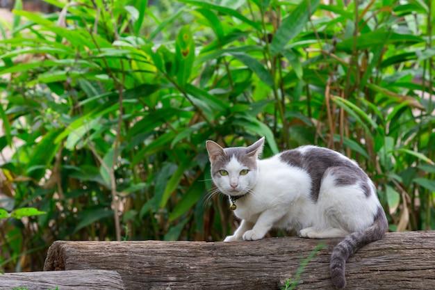 切り株に座っている黒と白の猫