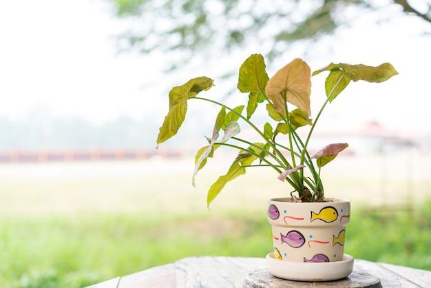 Маленькое растение в горшках, используемых для украшения кафе