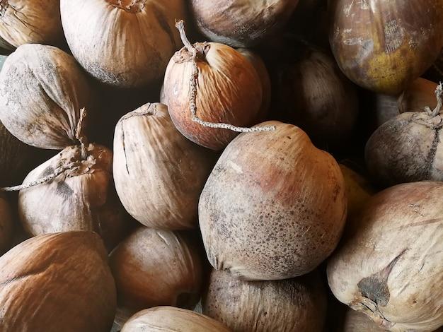 オールドココナッツとコイア