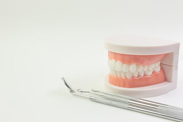 歯科用コンテンツの白い背景の上の歯のモデル。