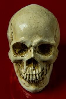 赤い背景光沢のある抽象的なイメージに頭蓋骨。