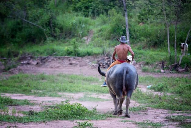 タイの田舎でバッファローに乗る男