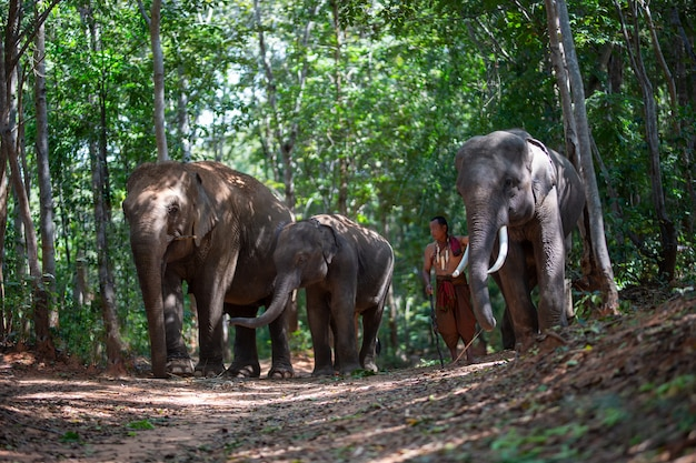 伝統的な衣装と森に座っている象の男性