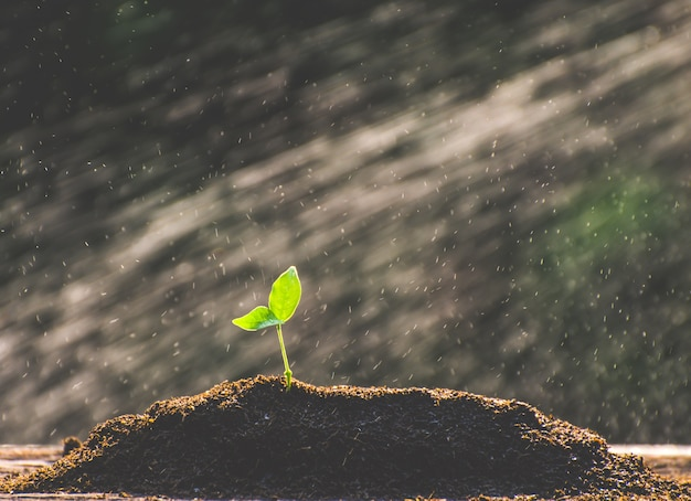 Посев растет с богатой почвы до утра