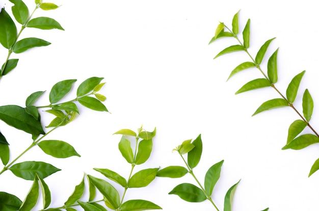 緑の葉の質感。葉のテクスチャ背景のトップビュー