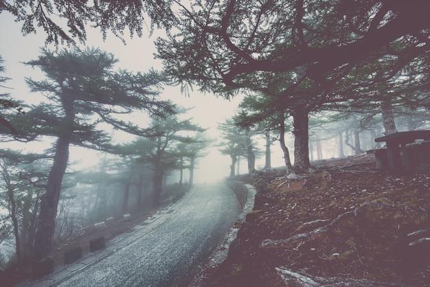 アスファルト道路は霧の暗闇を通過