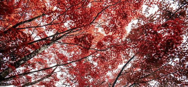 秋のカエデの葉自然の新鮮な背景