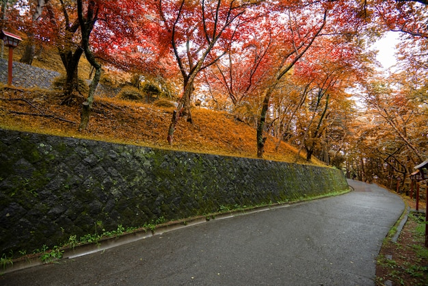 秋のカラフルな赤いカエデの葉