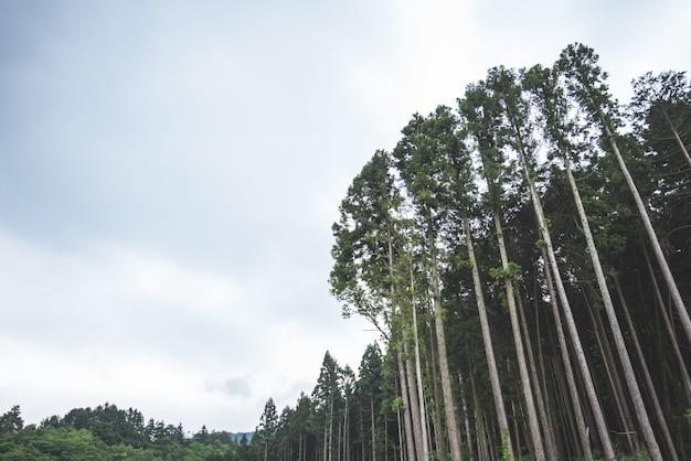 公園風景の背景に巨大なツリー緑の新鮮な自然