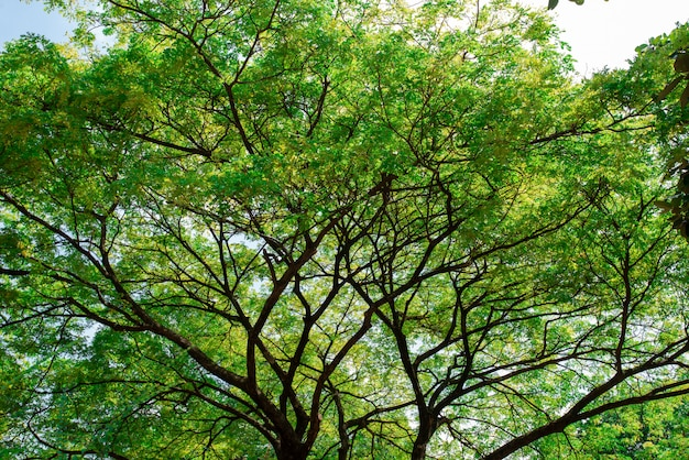 空を背景に新鮮な大きな緑の木