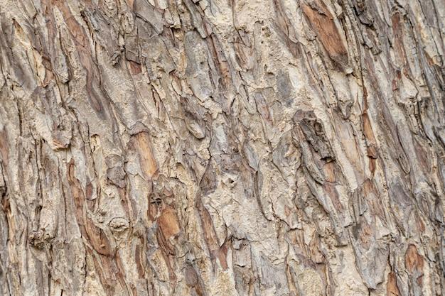 樹皮の木のテクスチャ。