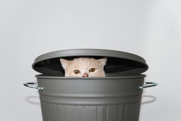 蓋のあるグレーのバケツから上がっているかわいい猫。