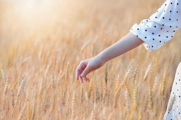 大麦に触れる女性手