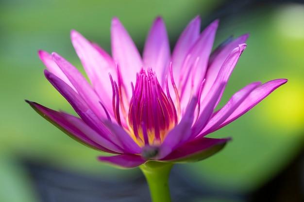 睡蓮や蓮の花を閉じる