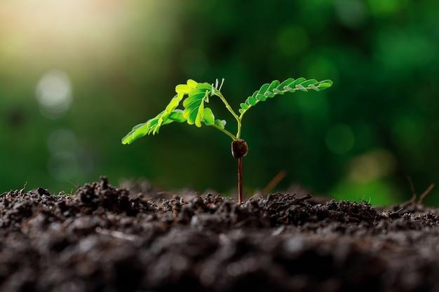 Молодое растение растет в плодородной почве.