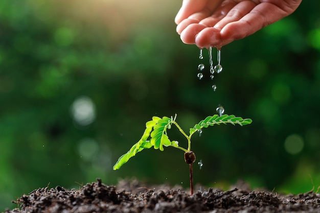 Рука фермера поливает молодые детские растения