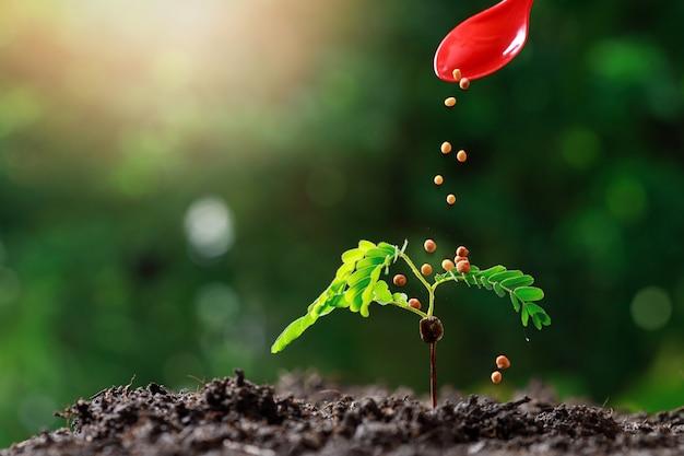 若い赤ちゃんの植物を育てる農家の手