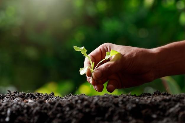 肥沃な土壌に芽を植える農民の手。