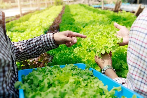 水耕栽培農場、労働者の収穫と温室の農場の庭でレタス有機水耕野菜から環境データを収集します。
