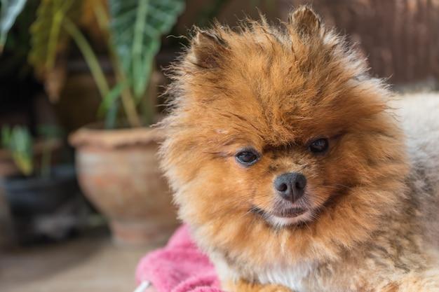 シャワーを浴びた後に拭くのを待っている犬