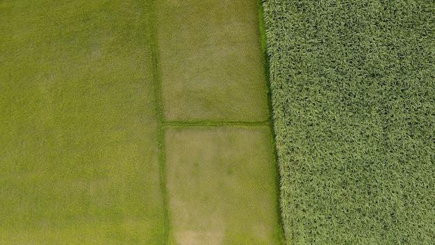 Аэрофотоснимок зеленых рисовых полей