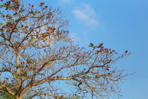 春の日中の青い空の木。