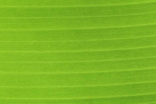 バナナの葉はテクスチャを閉じます。