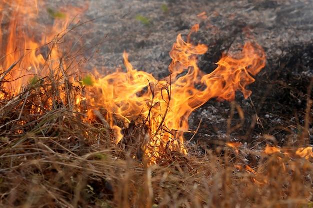 森の中で燃えている夏の野火