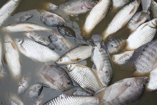 下水が原因で魚が死亡した