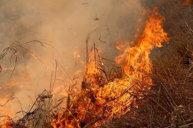 コンケンの農村部の森で燃え尽きる夏の野火。