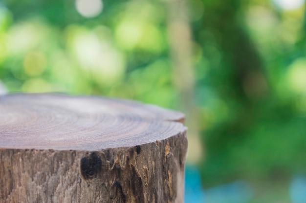 屋外の木の幹